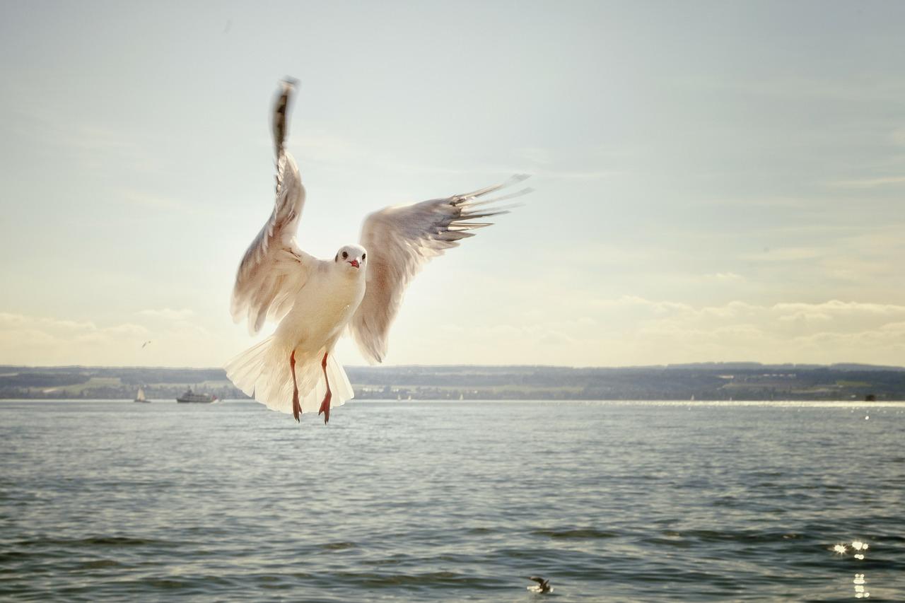 hábitat animal aéreo