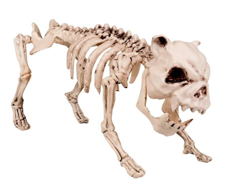 animal vertebrado