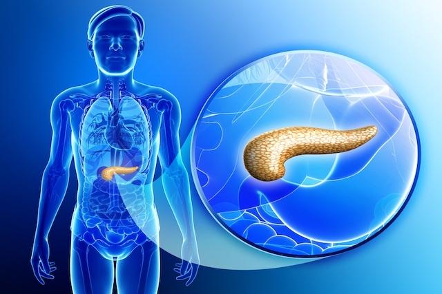El páncreas
